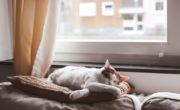 hogar acogedor aislamiento
